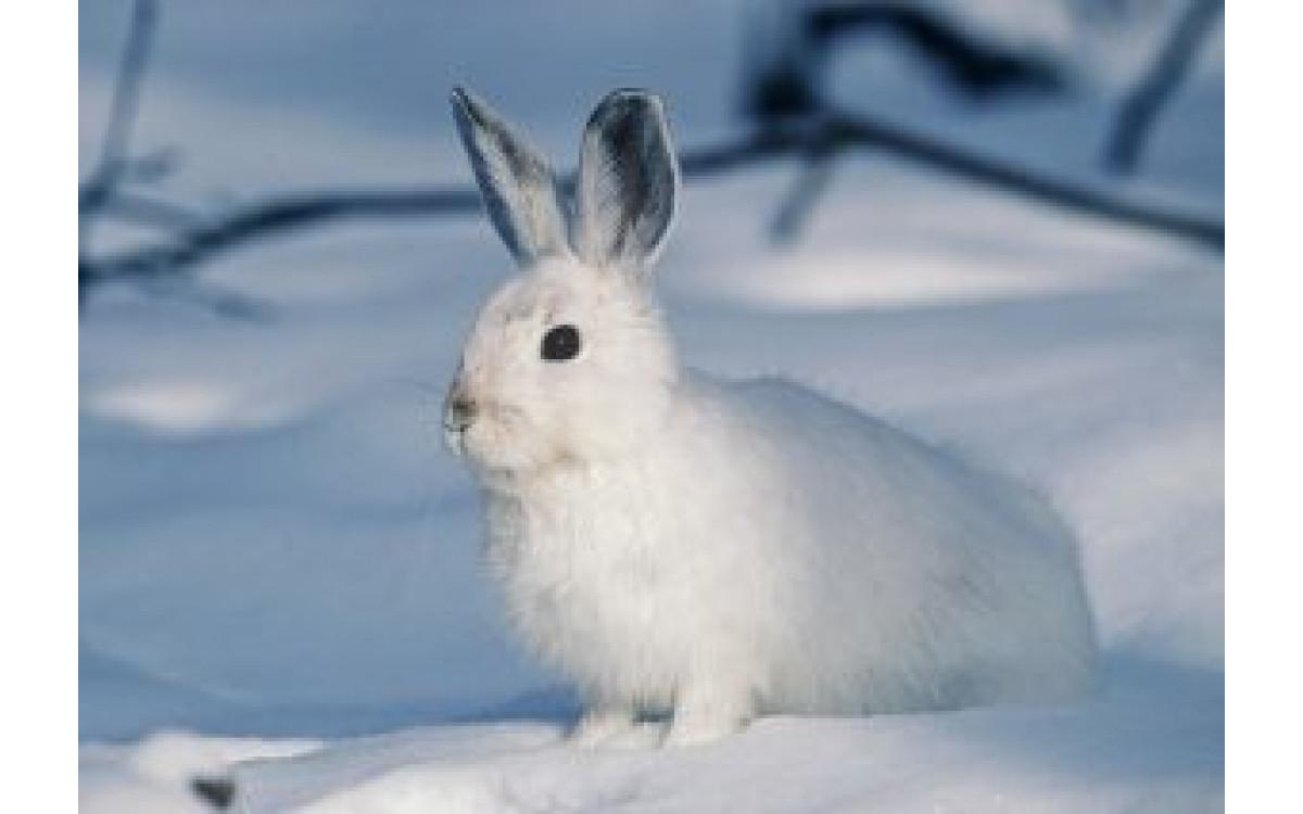 A Cute Collection of Random Rabbit Info